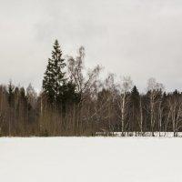 Лес за полем :: Алексей Горский