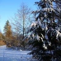 А вот и снег :: Sergej