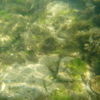 Отдых на море, Крым. Скнорлинг. Подводные пейзажи-47. :: Руслан Грицунь