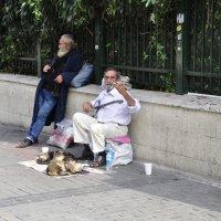 Уличный музыкант и кошки :: Сергей К