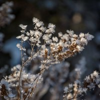 снежные мотыльки :: Андрей