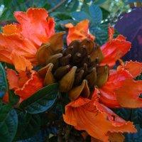 Австралийская флора. :: Лара Гамильтон
