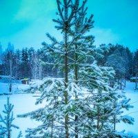 лесная елка :: Ирина