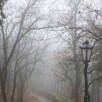 Поздняя осень. :: Makedonskii