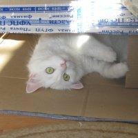 Хорошо в коробочке! :: Татьяна