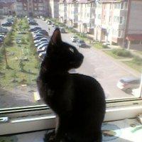 Кошачья грация. :: Татьяна