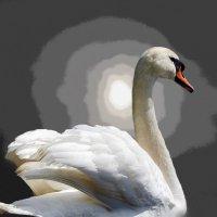 Лебедь :: Александр Михайлов