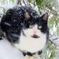 зимний кот :: Александр Прокудин