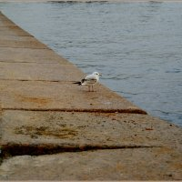 одиночество :: Galina Belugina