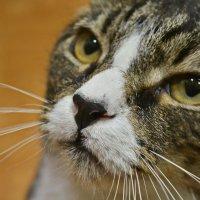 Портрет кота Гуффи :: Марина Никулина