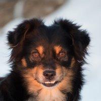Собака :: Ксения Репина