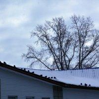 Голуби на крыше... :: Олег Афанасьевич Сергеев