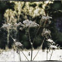 растительность :: Виктор Сосунов