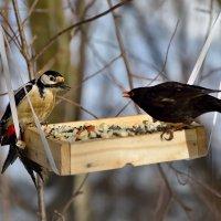 **** :: linnud