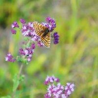 летняя бабочка :: Элла Чуксина