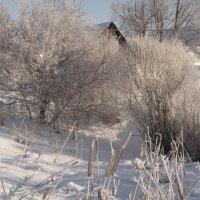 Замерзший пруд :: Ольга Осовская