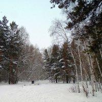 Прогулка в лесу. :: Мила Бовкун
