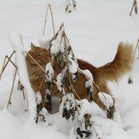 Любопытный кот :: наталия