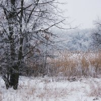 Кружевной лес 2 :: Oksana