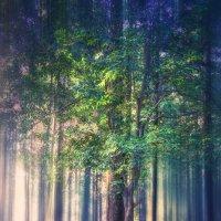 Японский лес :: Slava Hamamoto
