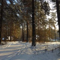 Дивный лес :: Алексеева Елена