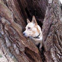 Топик в дубле дерева :: Тоня Просова
