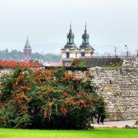 В Вавельском замке в Кракове :: Денис Кораблёв
