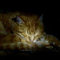 Спящий кот. :: Марина