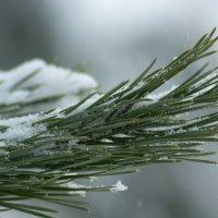 зелёный с белым :: Светлана Т