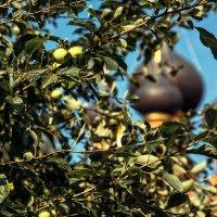 Яблочный спас в Останкино :: Нина