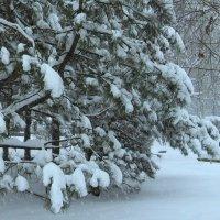 Снег идет :: Natali
