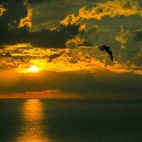 Утренняя птичка :: Александр Бойко