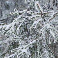 Зима :: Grishkov S.M.