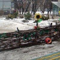 Тин і соняшники - це Україна! :: Нина Корешкова