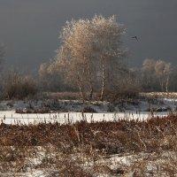 Замёрзли берёзки... :: Александр Попов