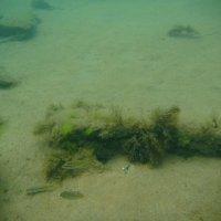 Отдых на море, Крым. Скнорлинг. Подводные пейзажи-60. :: Руслан Грицунь