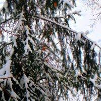 Зима :: Oleg Ustinov