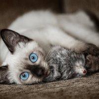 Эти глаза напротив... :: Олег Князев