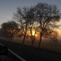 Утро туманное. Пробуждение. :: Регина Пупач