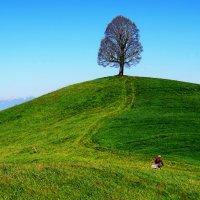 одинокое дерево :: Elena Wymann