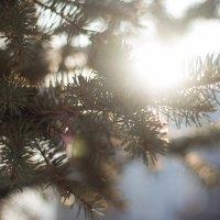 Зимнее солнце :: Ирина Холодная