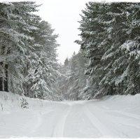 В зимнем лесу :: Лена L.