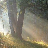 Утро на пригорке.... :: Юрий Цыплятников