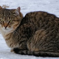 Бездомный кот :: Милешкин Владимир Алексеевич