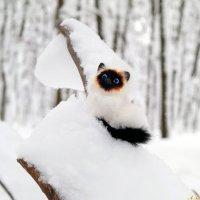 Кого только не встретишь в зимнем лесу:) :: Андрей Заломленков