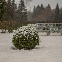 Павловск, первый снег :: Max Hyde