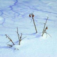 Под снежной периной :: Miko Baltiyskiy