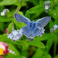 Мохнатая бабочка :: Андрей Кротов