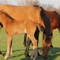 Дикие лошади :: Андрей Щинов