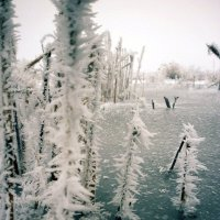 Замерзшие травинки :: mAri